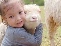 Tempat Wisata Anak di Bandung - Peluk Domba