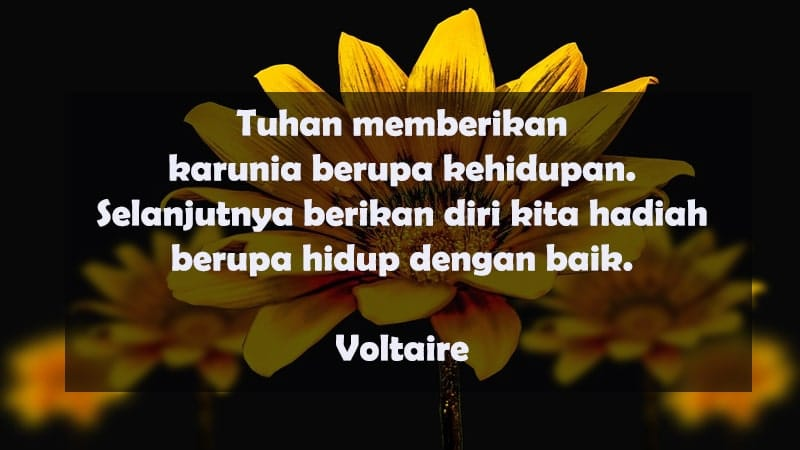 Kata-Kata Bijak Kehidupan - Voltaire