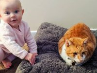 Foto-Foto Bayi Lucu - Bayi Lucu dan Kucingnya