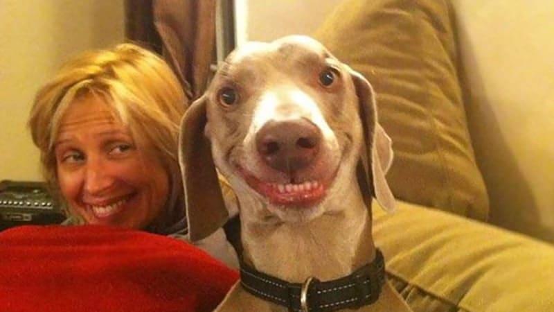 Kumpulan Gambar Hewan Lucu - Anjing Tersenyum