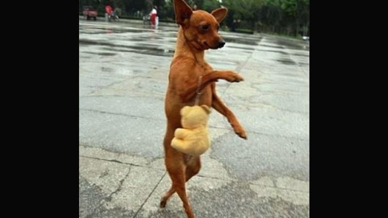 Kumpulan Gambar Hewan Lucu - Anjing Belanja