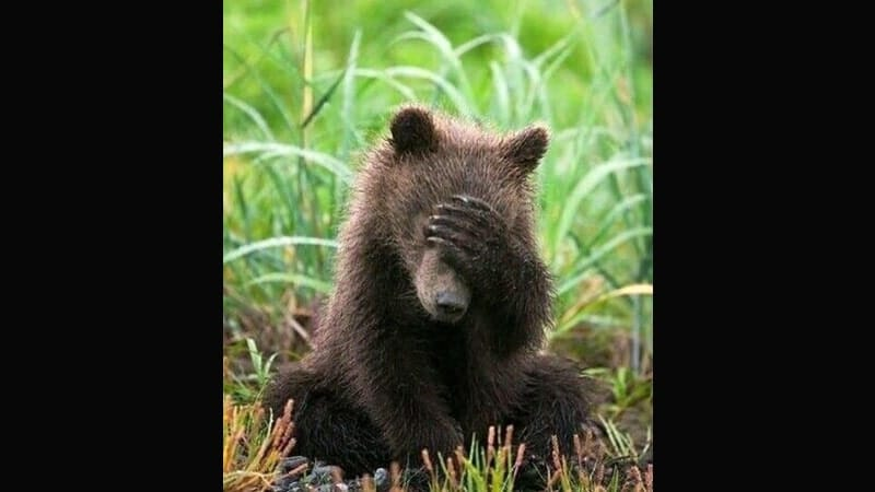 Kumpulan Gambar Hewan Lucu - Beruang Pemalu