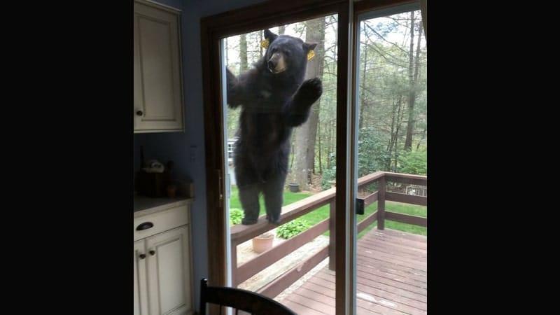 Kumpulan Gambar Hewan Lucu - Beruang Berkunjung