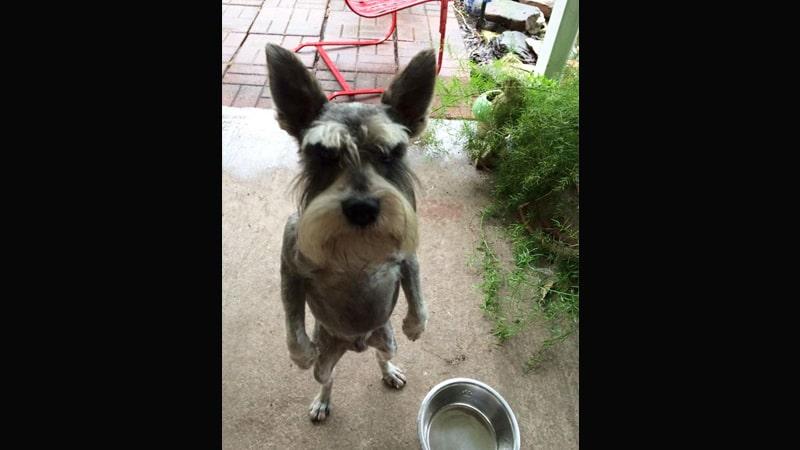 Kumpulan Gambar Hewan Lucu - Anjing Marah