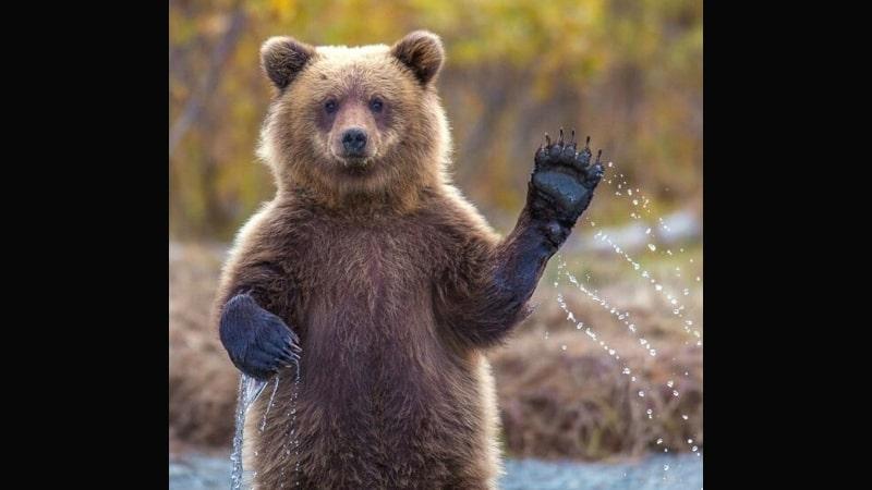 Kumpulan Gambar Hewan Lucu - Beruang Menyapa