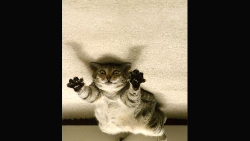 Kumpulan Gambar Hewan Lucu - Kucing yang Berniat Menakuti