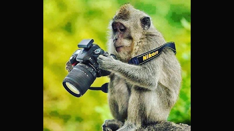 Kumpulan Gambar Hewan Lucu - Fotografer Monyet