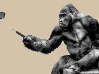 kumpulan gambar lucu - gorila swafoto
