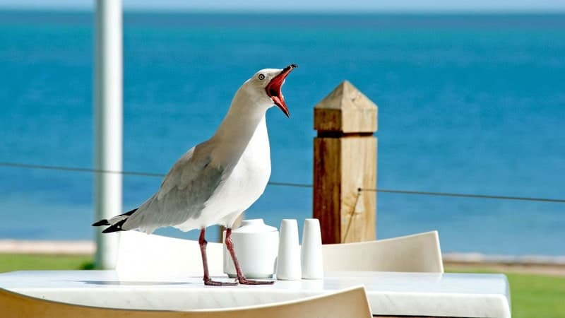 kumpulan gambar lucu - burung