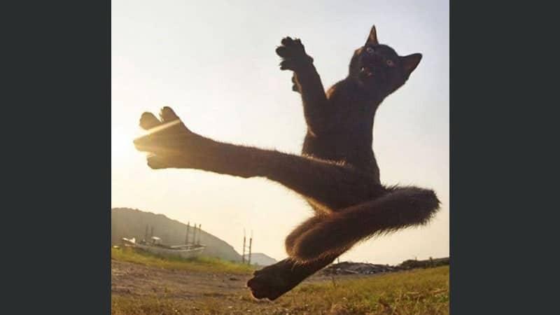 kumpulan gambar lucu - kucing ninja
