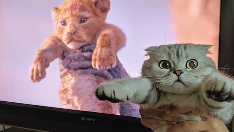 Foto-Foto Lucu Gokil Abis - Parodi Film The Lion King
