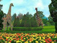 Taman Bunga Nusantara Cianjur - Topiari Jerapah