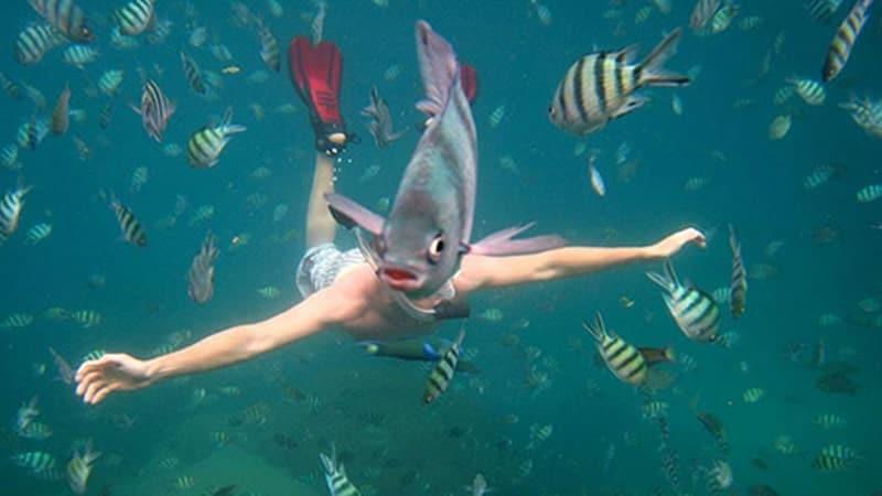 kumpulan foto lucu - kepala ikan