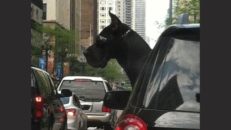 kumpulan foto lucu - anjing dalam mobil