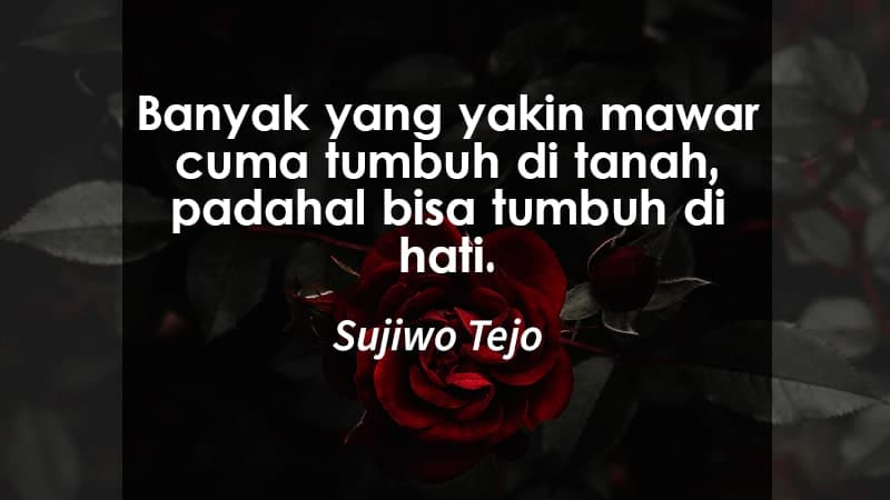 kata kata indah untuk kekasih - mawar